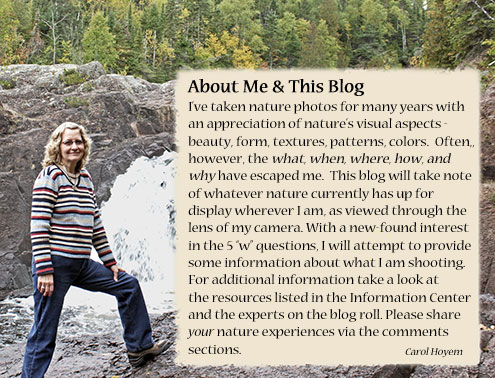 Information about me and the blog