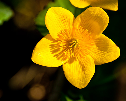yellow wild flower blossom
