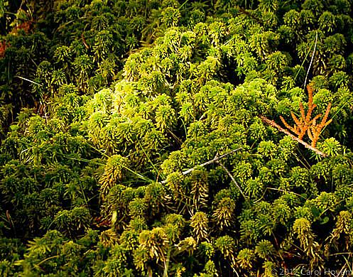 Blanket of Sphagnum Moss
