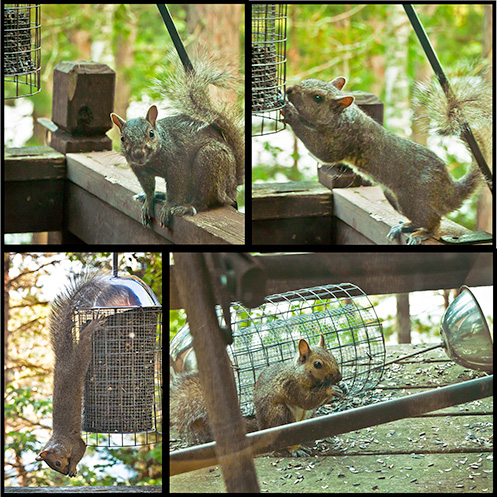 Squirrel next to downed bird feeder