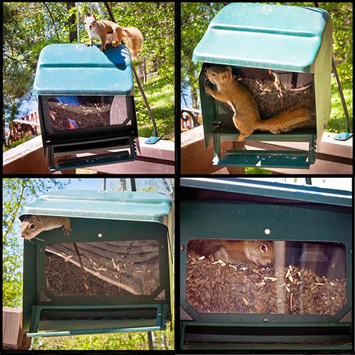 Squirrel in birdfeeder