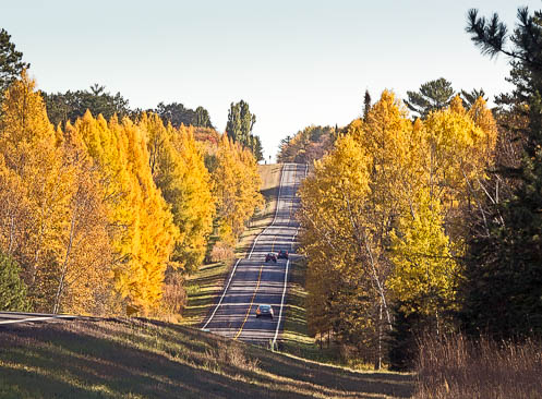tamarack in their gold fall colors line roadway